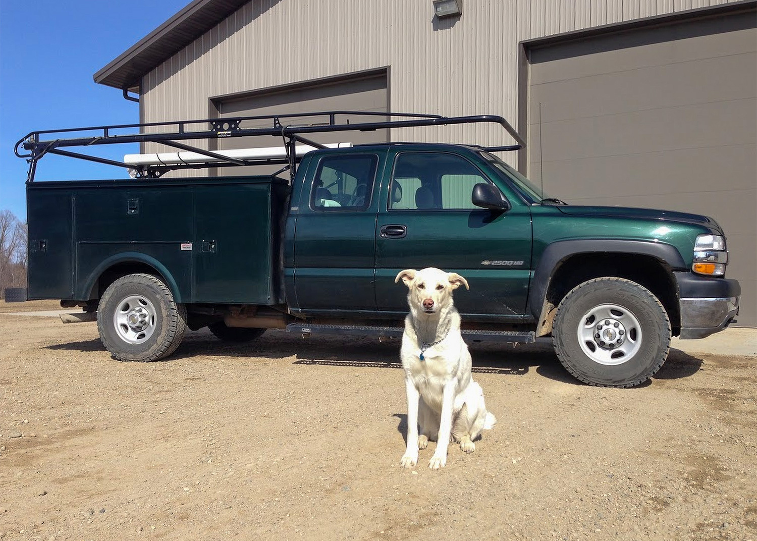 work truck and dog